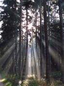 006 'Shine Through' - Baveria
