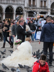 Wedding Pigeons?
