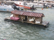 5 star duck accommodation, Galaxidi