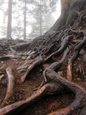 076 'Roots' - NE Turkey