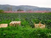 056 'Crates' - Western Turkey