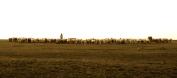 061 'Early Morning Herders' - Turkey
