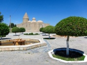 092 'Groomed Trees' - Bukhara, Uzbekistan