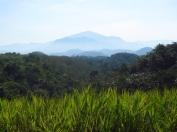117 'Mountain In The Malay Interior' - Malaysia