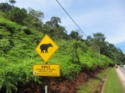 Beware... Tapir's on Road. A new first in mcneilsonwheels' road sign collection!
