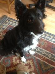 Meet 'Keela': our new friend